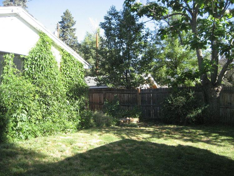Backyard at Flip 1 before updates